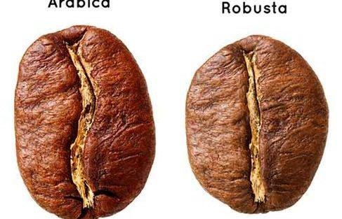 arabica robusta café grain de café fève santé arôme saveur sans allergènes buenavita